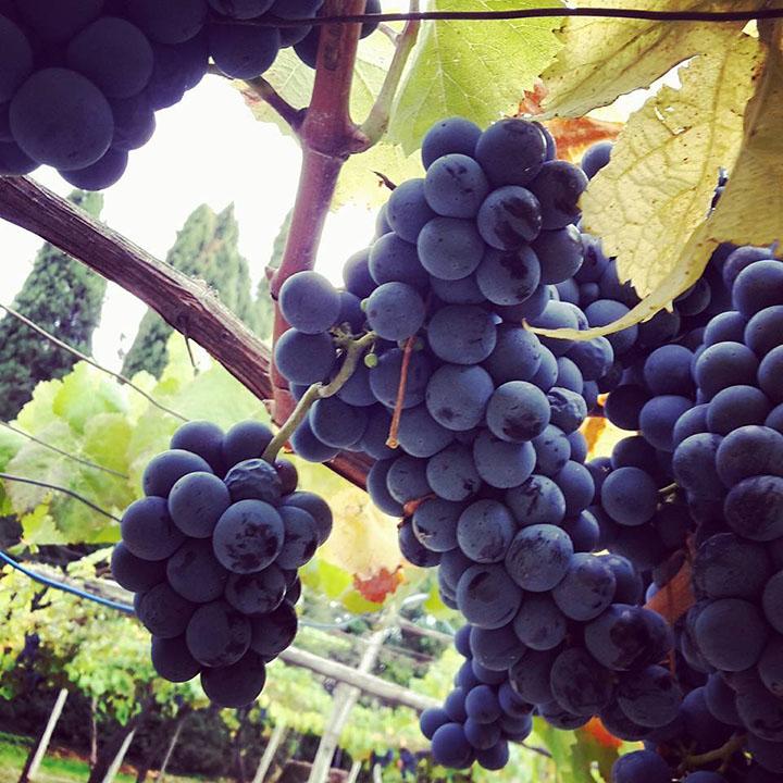 Azienda agricola | Maria Ernesta Berucci, Azienda agricola, vitivinicola e agrituristica