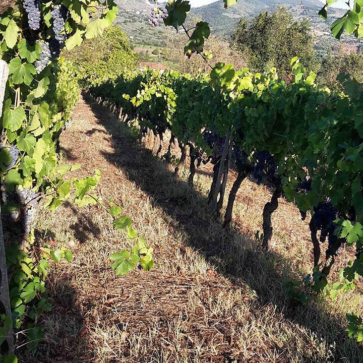 Aziena agricola | Maria Ernesta Berucci, Azienda agricola, vitivinicola e agrituristica