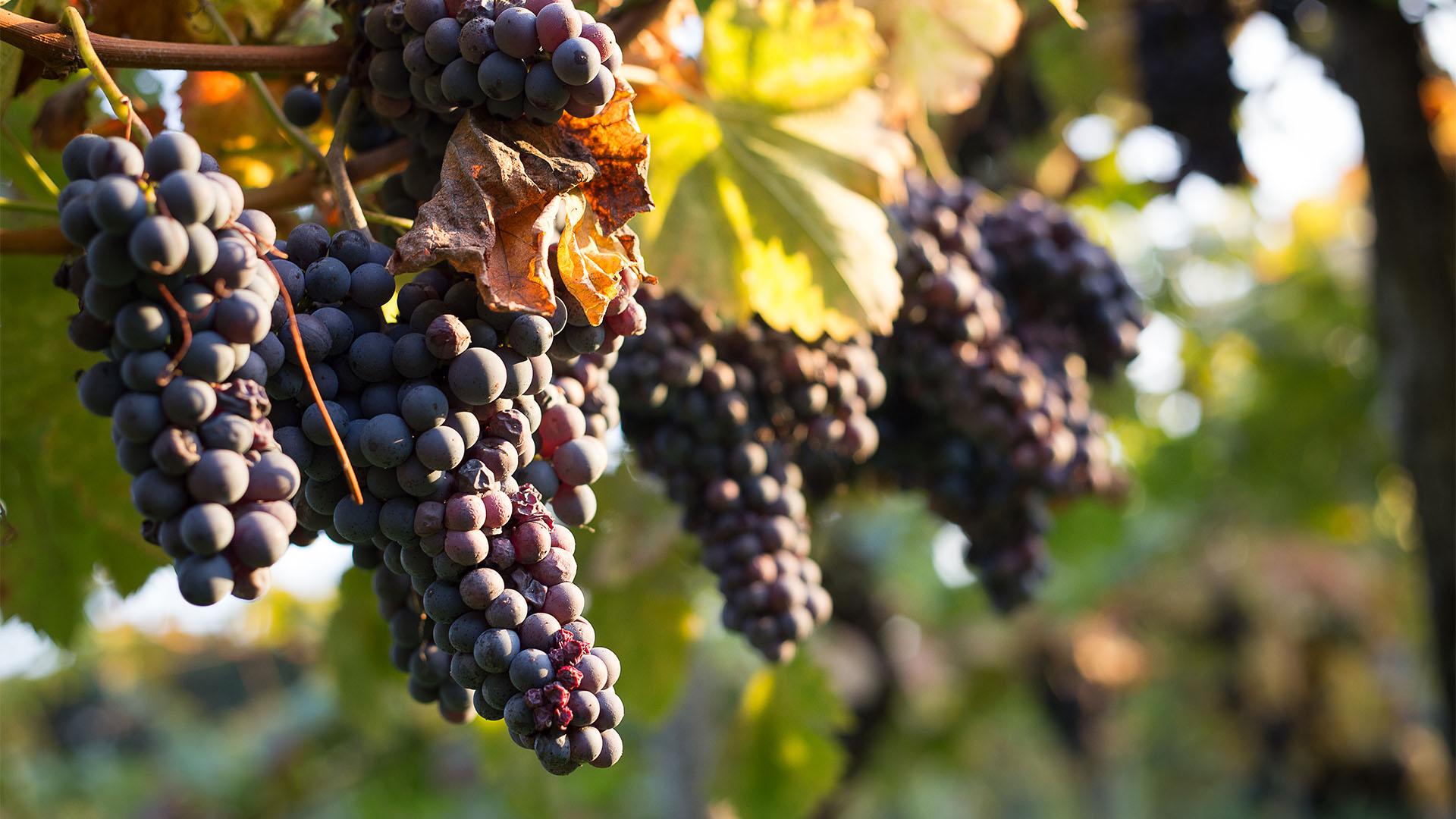 Maria Ernesta Berucci | Azienda agricola, vitivinicola e agrituristica