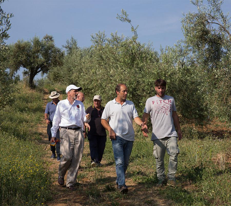 Olo-omeopatia | Maria Ernesta Berucci, Azienda agricola, vitivinicola e agrituristica