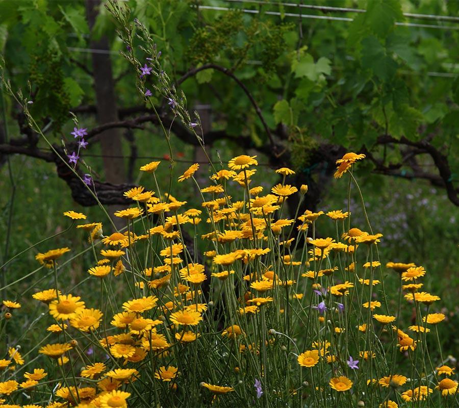 Wine Tasting | Maria Ernesta Berucci, Azienda agricola, vitivinicola e agrituristica